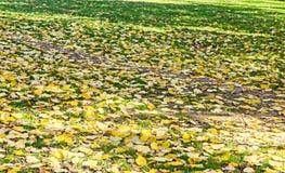 秋天时间在有色的橙黄叶子的室外公园 库存图片