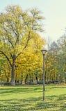 秋天时间在有色的橙黄树的室外公园 免版税库存图片