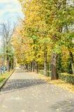 秋天时间在有色的橙黄树的室外公园 免版税库存照片