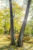 秋天时间在有色的橙黄树的室外公园 库存图片