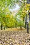 秋天时间在有色的橙黄树的室外公园 图库摄影