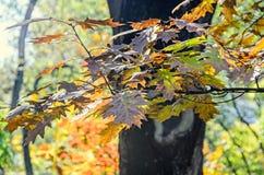 秋天时间在有色的橙黄树的室外公园 免版税图库摄影