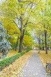 秋天时间在有色的橙黄树的室外公园 库存照片