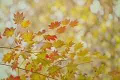 秋天时间概念 9个秋天颜色 秋天 背景美丽的纸照片葡萄酒 免版税库存图片