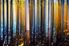 秋天时间的抽象森林 免版税库存照片