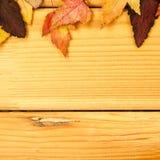 秋天时间装饰,干燥槭树留给pinnedrope晒衣夹,木背景 免版税库存图片