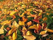 秋天明亮的叶子 库存照片
