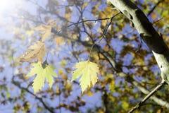 秋天明亮的叶子 库存图片