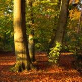 秋天明亮的多彩多姿的公园结构树 库存图片