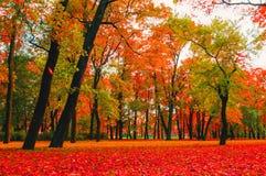 秋天明亮的自然-红色和橙色秋天树在城市在多云秋天天气停放 库存图片