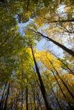 秋天明亮的颜色森林离开阳光 免版税图库摄影