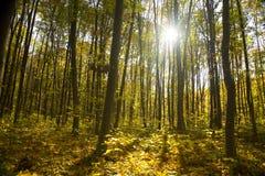秋天明亮的颜色森林离开阳光 免版税库存照片