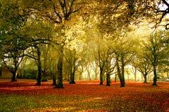 秋天明亮的颜色森林 免版税库存照片