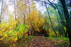秋天明亮的颜色 莫斯科的本质 2017年 免版税库存照片