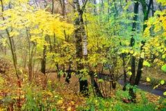 秋天明亮的颜色 莫斯科的本质 2017年 库存图片