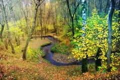 秋天明亮的颜色 莫斯科的本质 2017年 库存照片