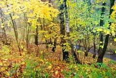 秋天明亮的颜色 莫斯科的本质 2017年 免版税图库摄影
