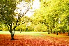 秋天明亮的风景 免版税库存图片