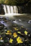 秋天是叶子的最坚硬的季节 免版税库存照片