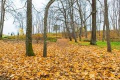 秋天是树得到赤裸 库存图片