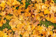秋天是树得到赤裸 图库摄影