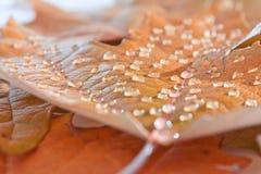 秋天是雨季 免版税库存图片