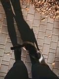 秋天晚上和猫 免版税库存图片