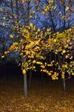 秋天晚上小灌木林风景 免版税图库摄影