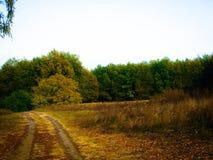 秋天晚上森林风景 免版税库存图片