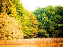 秋天晚上森林风景 库存图片