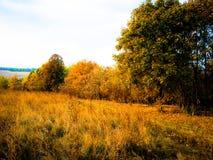 秋天晚上森林风景 库存照片