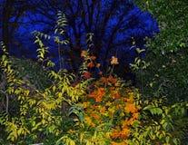 秋天晚上森林钴蓝色天空 图库摄影