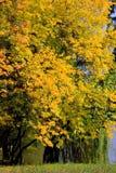 秋天晴朗日的公园 库存图片