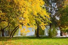 秋天晴朗日的公园 免版税库存图片