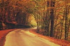 秋天晴朗的森林公路,自然风景,葡萄酒样式 免版税图库摄影