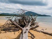 秋天暴风云形成在Nai杨海滩的漂流木头在P附近 免版税库存照片