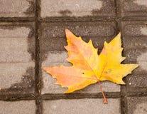 秋天最后叶子  库存照片