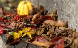 秋天月秀丽  库存照片