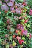 秋天月10月显示在fenc的五颜六色的红色和绿色叶子 库存图片