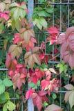 秋天月10月显示在fenc的五颜六色的红色和绿色叶子 库存照片