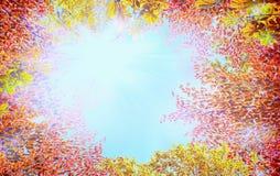 秋天有五颜六色的叶子的树冠在与阳光的蓝天背景 免版税图库摄影