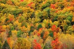秋天有五颜六色的树的山森林 库存图片