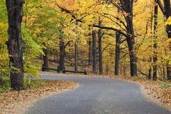 秋天有天篷水平的路 免版税库存照片