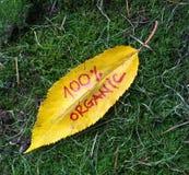 秋天有手写的文本的核桃叶子 免版税库存照片