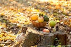 秋天有机果子-季节性果子 免版税库存图片