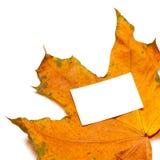 秋天有白色空的卡片的干槭树叶子 免版税图库摄影