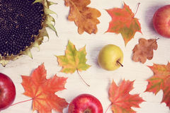 秋天有益于收获 免版税库存照片