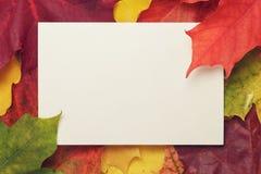 秋天有纸牌的槭树叶子 库存照片