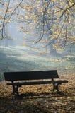 秋天有薄雾的早晨公园 库存照片