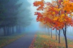秋天有薄雾的早晨 免版税库存图片